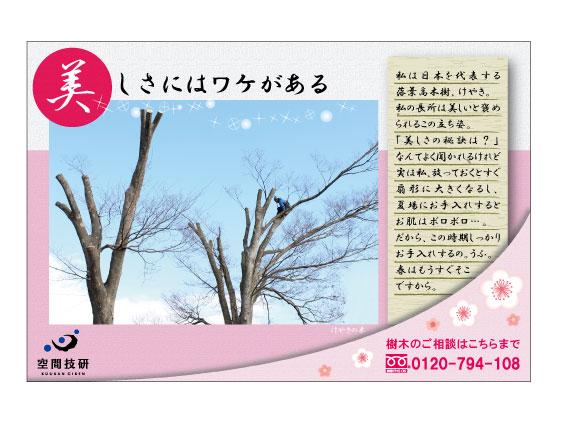 樹木DM2月分