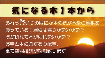 樹木お葉書宛名面10月